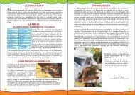 introducción la apicultura la abeja - Municipalidad Ecológica ...
