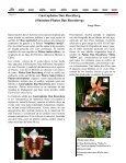 (Ticorqu\355deas 8 09) - Asociación Costarricense de Orquideología - Page 3