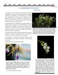 (Ticorqu\355deas 8 09) - Asociación Costarricense de Orquideología - Page 7