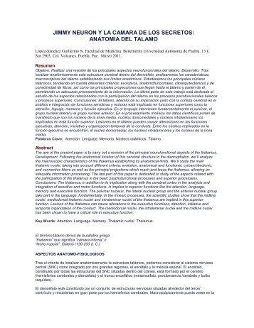 JIMMY NEURON Y LA CAMARA DE LOS SECRETOS: ANATOMIA ...