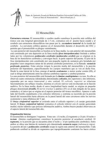 El Mesencéfalo - Escuela de Medicina