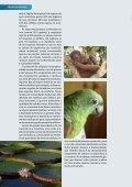 Biodiversidade Amazônica - Biblioteca da Floresta - Page 2