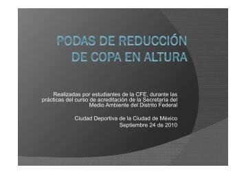 Podas de reducción de copa en altura (CFE – SMA D.F.)