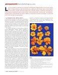 diversidad biólogica y usos - Conacyt - Page 3