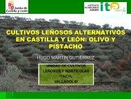 Cultivos leñosos alternativos en Castilla y León, Olivo y Pistacho.