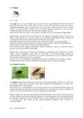 DOSSIER INSECTEN - Page 5