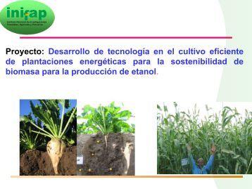 Desarrollo de tecnología en el cultivo eficiente de plantaciones ...