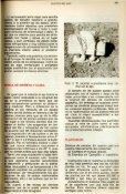 CULTIVO DEL AJO - Banco de Seguros del Estado - Page 3