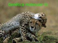 Genética molecular (I)