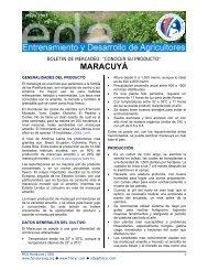 MARACUYÁ - Cuenta del Milenio - Honduras