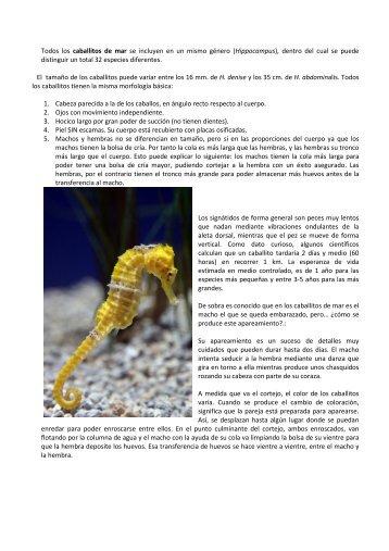 Saber más sobre los caballitos de mar