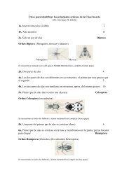 Claves para identificar insectos - Organismos