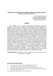 Ilex paraguariensis St. Hil. - Embrapa Florestas