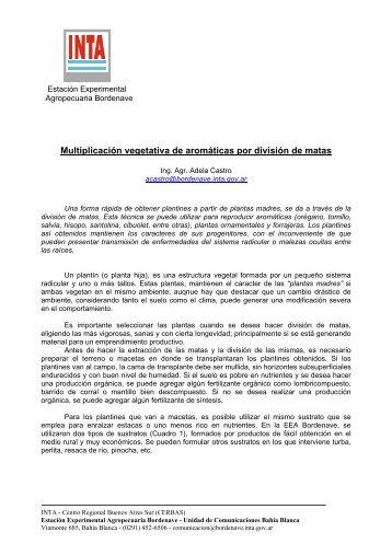 Multiplicación vegetativa de aromáticas por división de matas - INTA