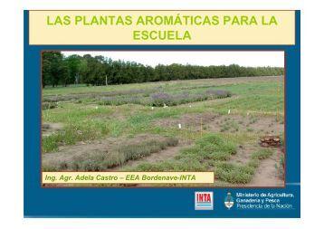 LAS PLANTAS AROMÁTICAS PARA LA ESCUELA - INTA