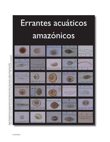 Errantes acuáticos amazónicos - Revista El Astrolabio