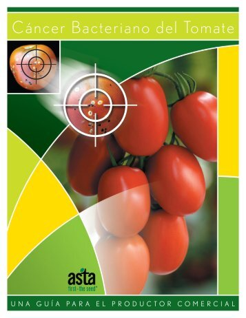 Cáncer Bacteriano del Tomate