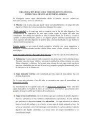 ORGANIZACIÓN BÁSICA DEL TUBO DIGESTIVO (MUCOSA ...