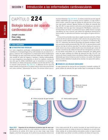 Capítulo 224-Biología básica del aparato cardiovascular - McGraw-Hill