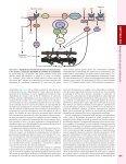 Capítulo 224-Biología básica del aparato cardiovascular - McGraw-Hill - Page 4