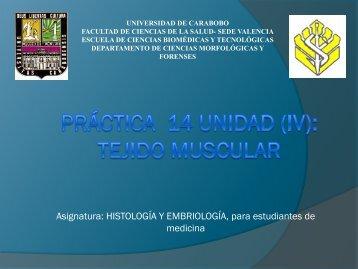 Práctica unidad vi: tejido conjuntivo especializado - Universidad de ...