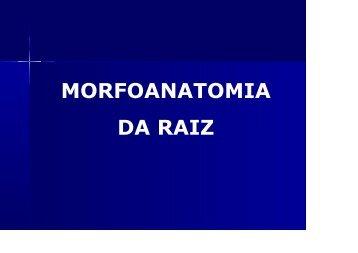 RAIZ - cesnors