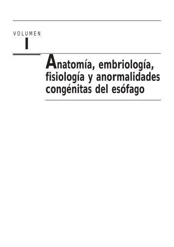 Anatomía, embriología, fisiología y anormalidades ... - Axon