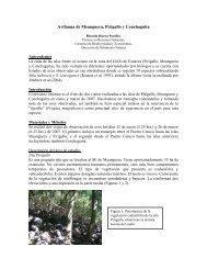 Avifauna de Meanguera, Pirigallo y Conchaguita - Ministerio de ...