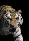 Ropa Tiger mehrsprachig 16stg - ROPA Fahrzeug - Page 2