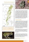 Artículos Joyas que no debemos perder. Las ranas marsupiales de ... - Page 3