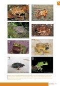 Artículos Joyas que no debemos perder. Las ranas marsupiales de ... - Page 5