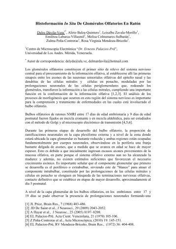 Histoformación In Situ De Glomérulos Olfatorios ... - Acta Microscopica
