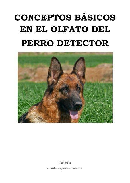 Conceptos Básicos En El Olfato Del Perro Detector Perros