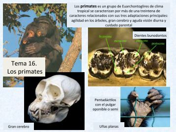 Tema 16. Los primates - Aragosaurus