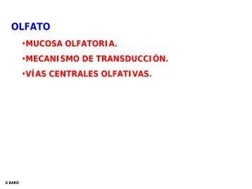 8. OLFATO.pdf - Eldentistanovato.es