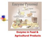Enzyme in Food & Agricultural Products