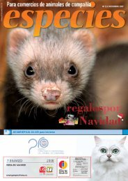 ACUARIOFILIA: Un killi para iniciarse - especies