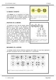 8) LA MEIOSIS LA MEIOSIS: CONCEPTO La meiosis es ... - IES Pando