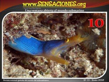Pulpo de Anillos AZULES - SENSACIONES.org