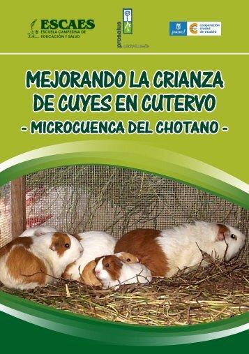 Mejorando la Crianza de Cuyes en Cutervo - ESCAES