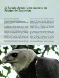 El Águila Arpía: Una especie en Peligro de Extinción