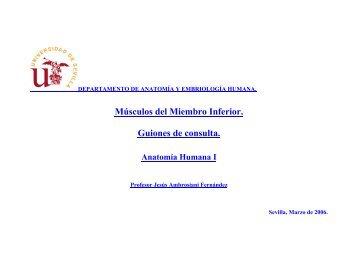 Músculos del Miembro Inferior. Guiones de consulta. - Personal.us.es