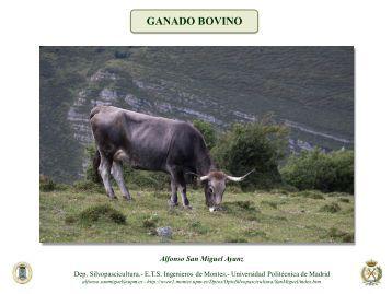 Ganado bovino - Universidad Politécnica de Madrid