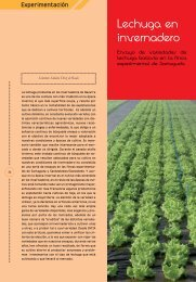 Lechuga en invernadero - Navarra Agraria