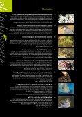 Revista Nº 20 El indiferente (PDF) - Villa de La Orotava - Page 2