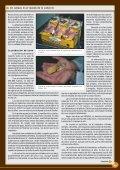 En cabeza en el mundo de la codorniz - Avicultura - Page 3