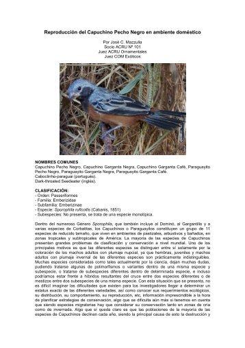 Reproducción de Capuchino Pecho Negro en ambiente ... - Acru
