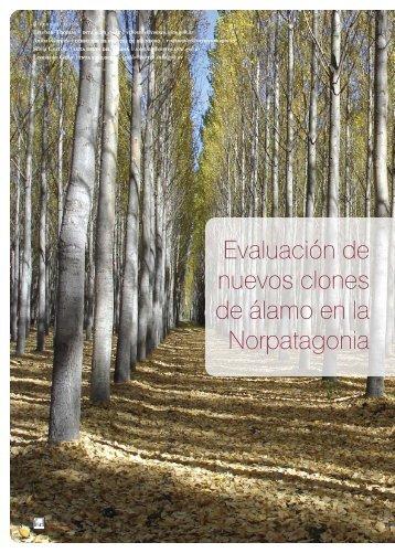 Evaluación de nuevos clones de álamo en la Norpatagonia - INTA