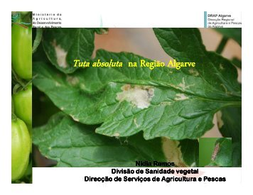 na Região Algarve Tuta absoluta - DRAP Centro