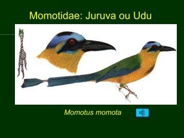 Aves PEG 3